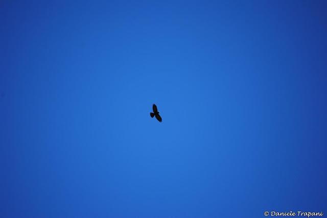 Volare nel blu