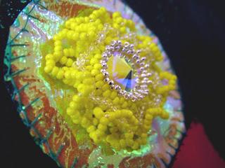 Swarovski Rivoli - Yellow Sun