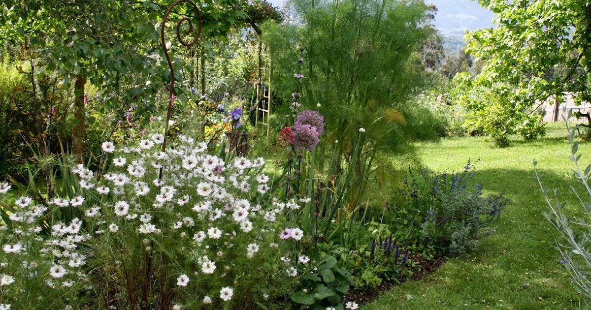 El jard n de margarita nigellas damascenas blancas for Jardin de invierno loi suites