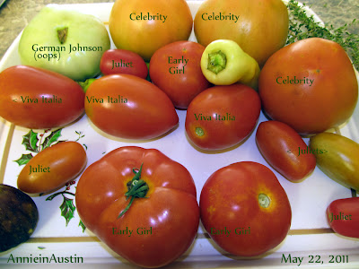 AnnieinAustin,2011,05, tomatoes with IDs