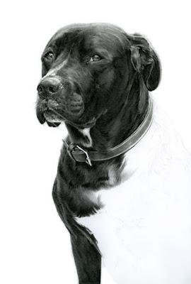 Marking On Dog Chest Name