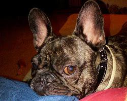 Henry The Studio Dog