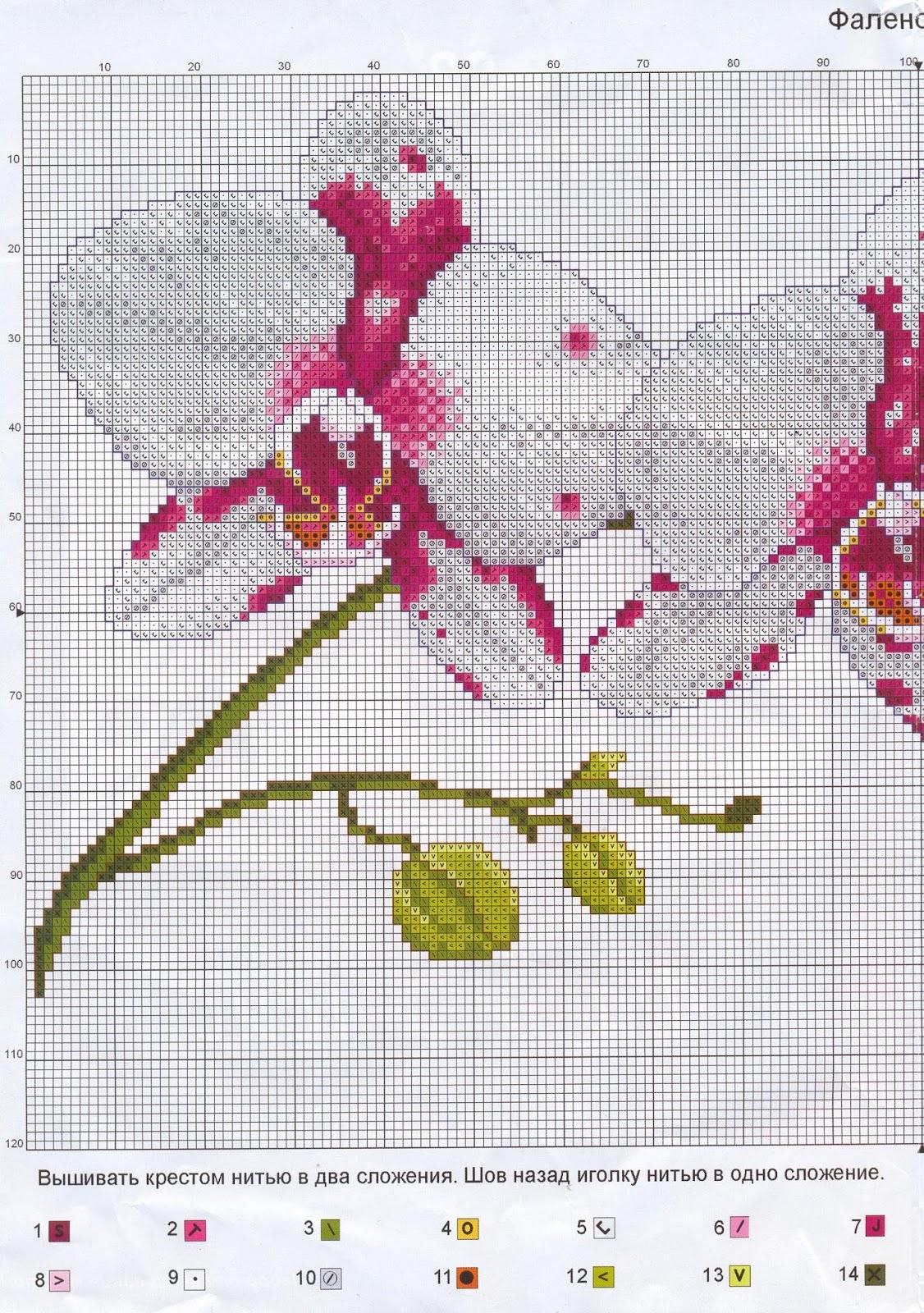 Вышивка схема орхидея 84