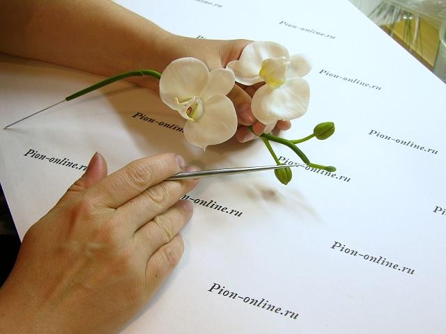 Орхидея Фаленопсис из полимерной глины. Мастер класс.