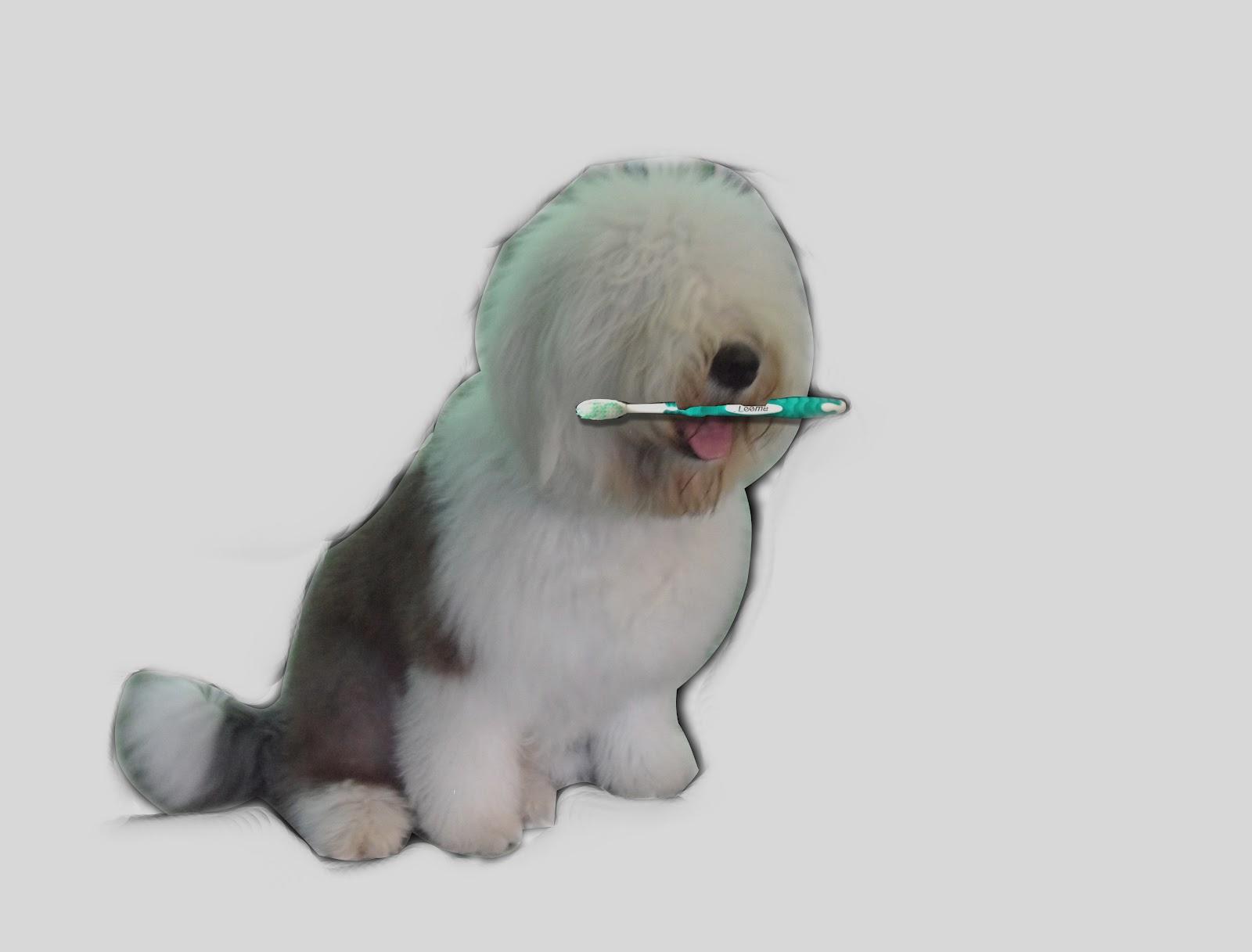 Higiene-Bucal-Canina