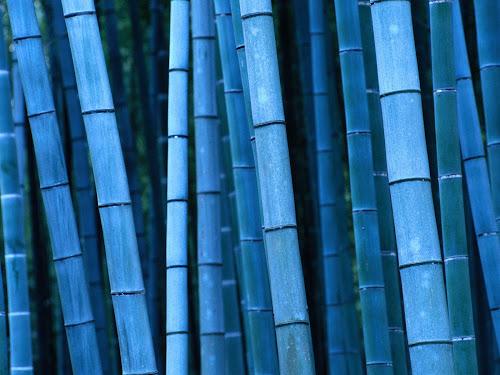 Wallpaper Bambu Terbaik