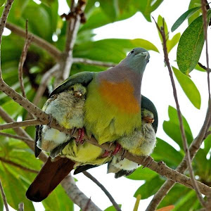 Psalm 91:4, He will cover you with his feathers. He will shelter you with his wings.