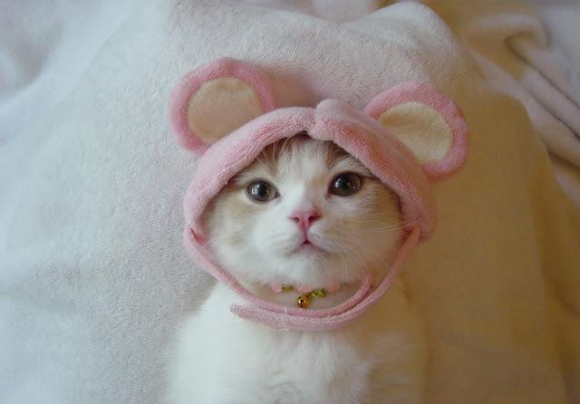 Cute Cats cute kittens kitties