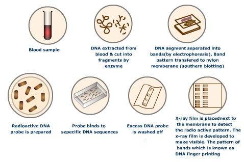 the importance of dna testing in solving crimes For both violent and property crimes, dna technology is often the critical factor in prosecuting the guilty and exonerating the innocent  the amount of evidence requiring dna testing has contributed to significant backlogs of forensic analysis throughout the.