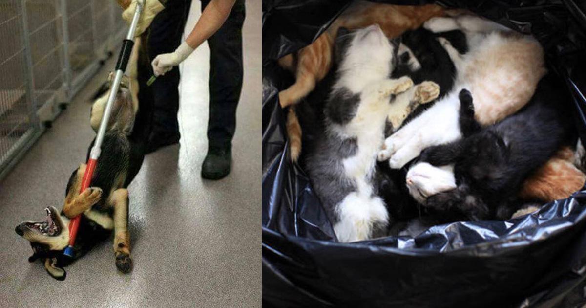 No al exterminio de animales en las perreras municipales