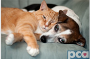 May is Pet Cancer Awareness Month - Click to learn more.