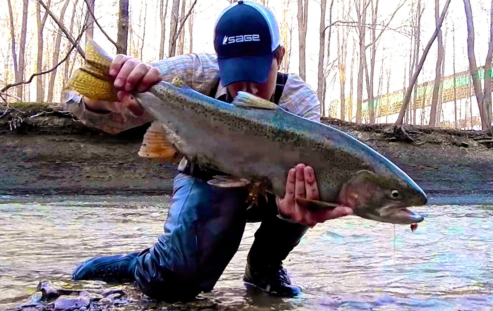 D h lake erie steelhead fishing report 4 11 4 13 for Brookville lake fishing report