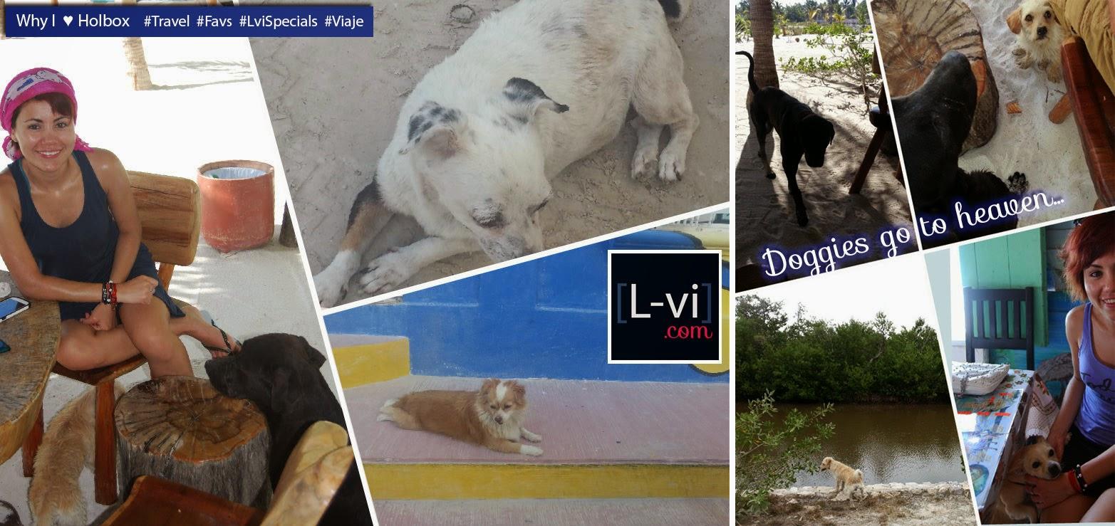 [Doggies go to heaven/ Los perritos van al cielo] ]Why I ♥ Holbox by Lucebona. L-vi.com
