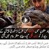 Snake Discovery Channel And Reporter Amazing Video