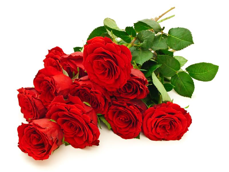 Banco de im genes 15 fotos de rosas de colores roses - Gama de colores rosas ...