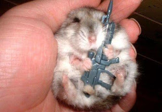 Funny Animal With Gun
