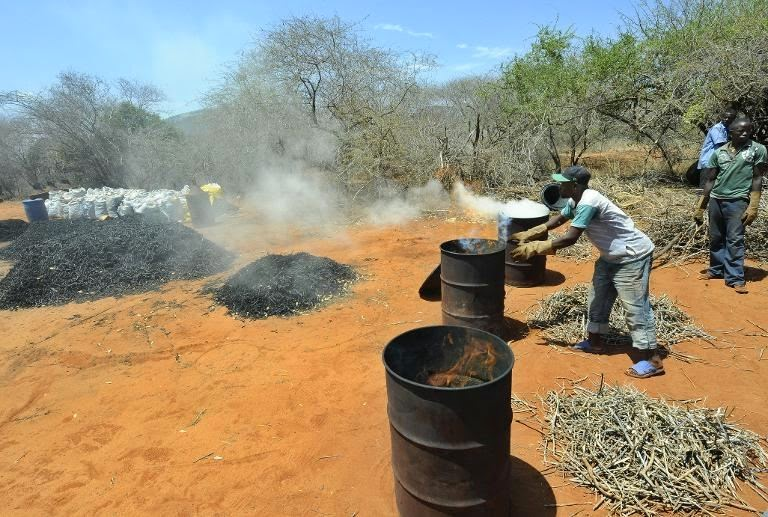 A farmer is seen making charcoal from twigs pruned from local forest during a controlled charcoal-making excercise at Maungu, a village some 300km southeast of Kenyan capital Nairobi, on February 11, 2011,  (Credit: Tony Karumba/AFP File) Click to enlarge.