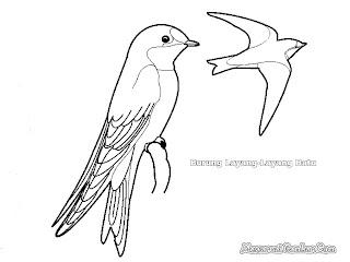Mewarnai Gambar Burung Layang Batu