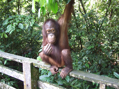 Borneo Kota Kinabalu Sandakan Trip Review
