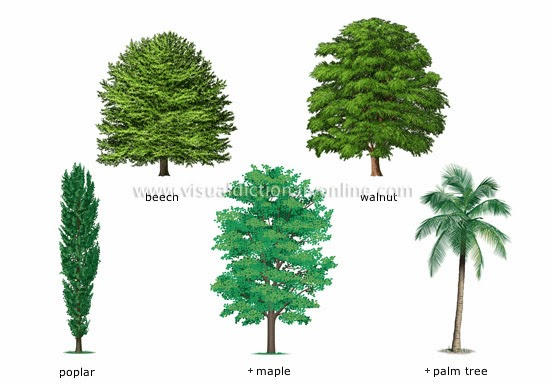 The english cubby types of plants for Garden trees types