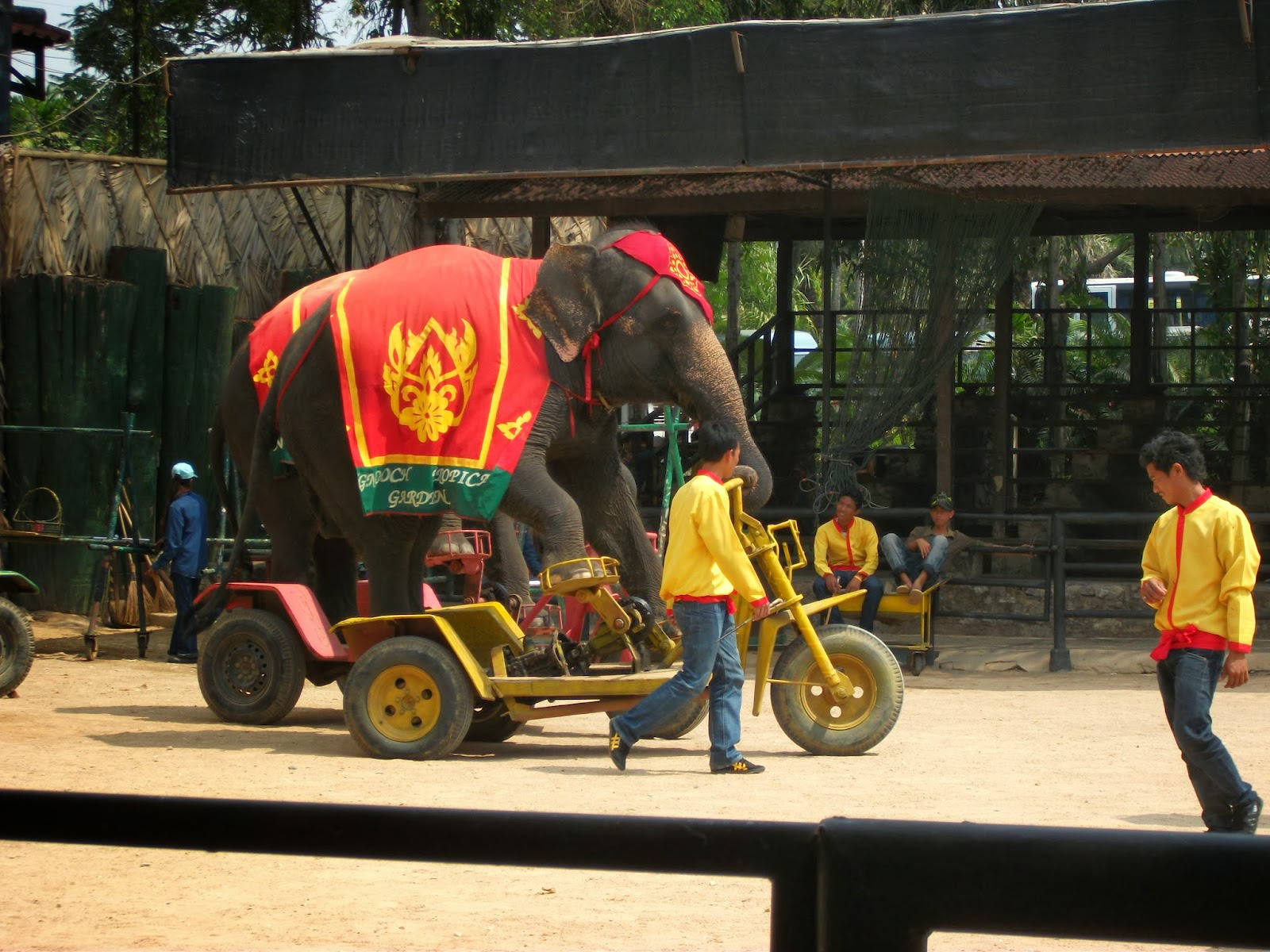 cycling skill of an elephant at Nong Nooch Tropical Garden