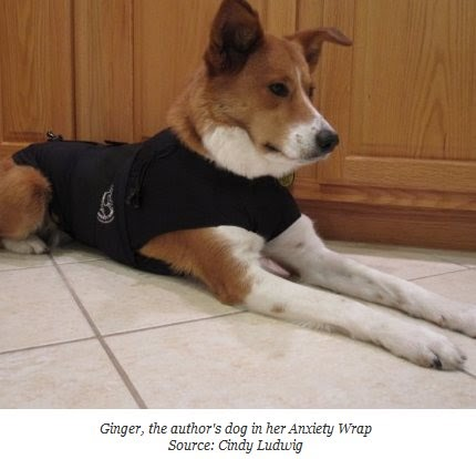 Top 5 Best Dog Anxiety Vests for Calming Dogs - YouTube
