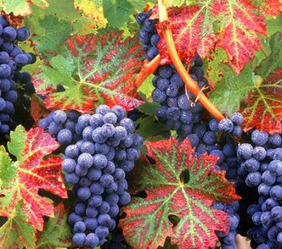 Quem está unido a Jesus produz frutos
