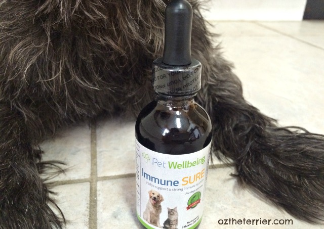 Oz the Terrier with Immune SURE immune support supplement by Pet Wellbeing