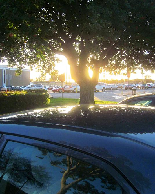 tree silhouette, afternoon light, reflection of a tree in car window