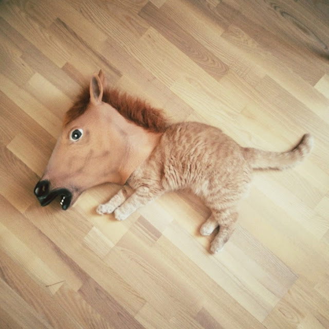 Funny cats - part 50, funny cat photos, funny pictures of cats, cat photography
