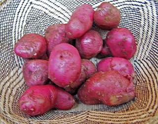 Woven Basket with Young Red Potatoes