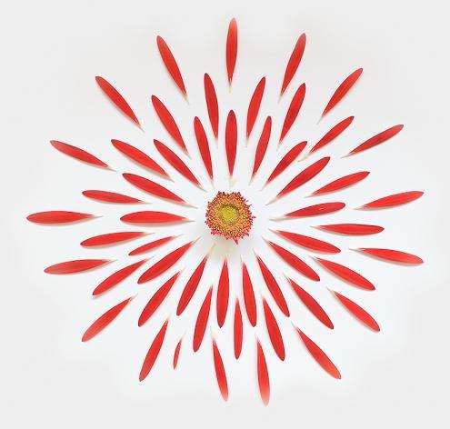 Fong Qi Wei flores explodidas explosão floral fotografia
