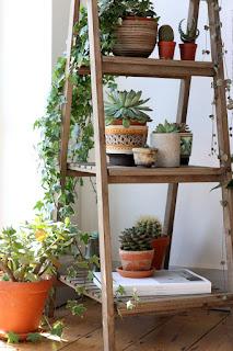 display indoor plants
