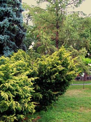 Деревья Владимирской горки