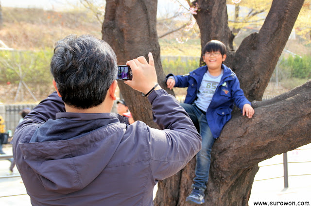 Padre tomando foto a hijo subido a cerezo