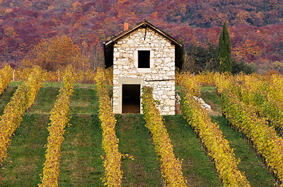 An autumn day in the vineyard