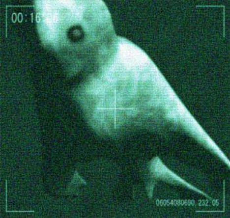 ikan duyung terdampar - photo #11