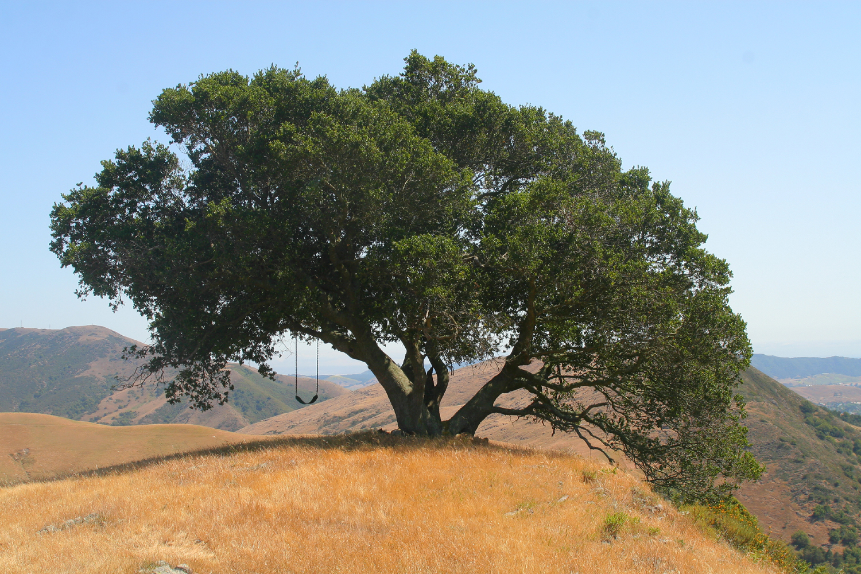 This swinging under the oak tree latina!!!!