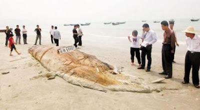 http://4.bp.blogspot.com/-TeA5vn2KLRk/Tbwss1PNdMI/AAAAAAAAYUQ/ewZCP07uxpI/s1600/chinafish.JPG