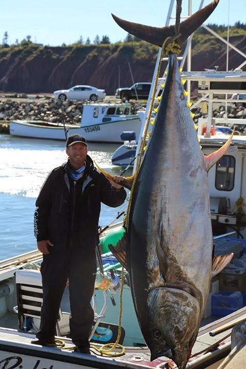 Steve White Vw >> Big Fishes of the World: TUNA BLUEFIN page 2