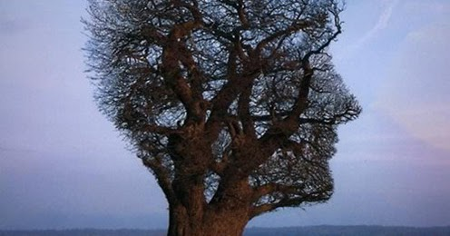 a tree telling of orpheus Orpheus wished and prayed,  tell me, she says, and let me bring you some help: age does not slow me  a tree gleams in the middle of the field, with.