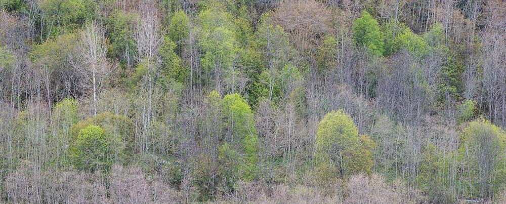 trær om våren, hølonda, Øyvind Buljo