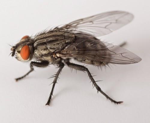 3 petua halau lalat untuk dicuba