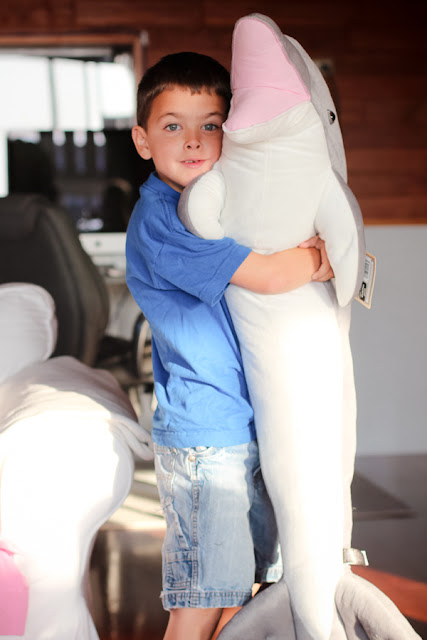 Cooper's birthday, huge stuffed animal dolphin