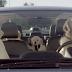 Αφού το εγκρίνουν οι σκύλοι-μέρος α' (βίντεο)...