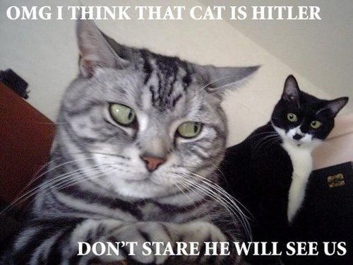 OMG - I Think That Cat Is Hitler - Don't Stare He Will See Us