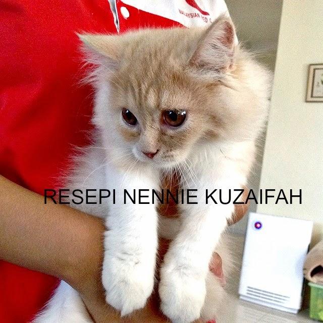 Resepi Nennie Khuzaifah Kucing Kucing Kami