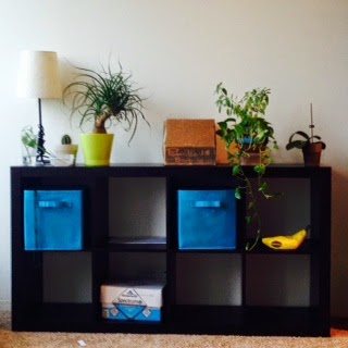 Plants sitting on a small bookshelf. There is also a lamp on here, and some boxes, but they are on the shelves and the plants are on the top. It is one of those bookcases with square shelves and only half height. The plants on the far left are in glasses. There is a spiky tree with curly leaves in a pot. There is a cardboard box on top. There is also an orchid but it is not blooming so it doesn't look very exciting right now.