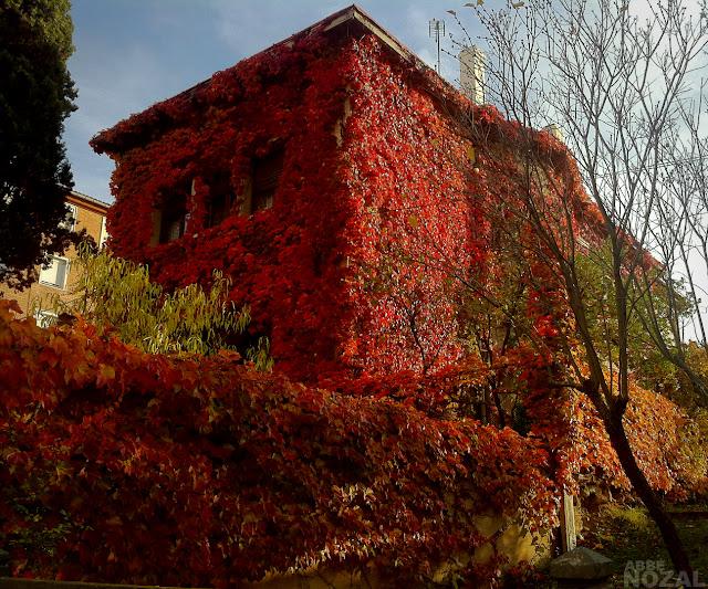 Martes soleado de otoño, 2012 (cc) Abbé Nozal