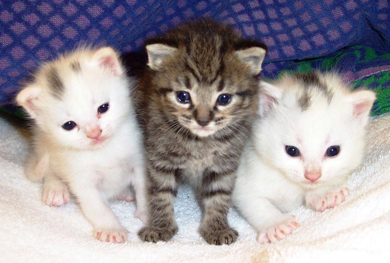 Gambar Kucing Animasi godean.web.id